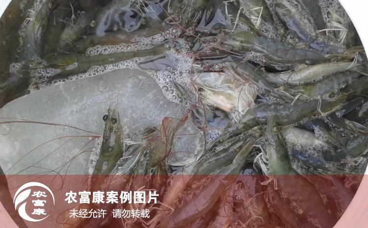 农12博体育水产养虾图片
