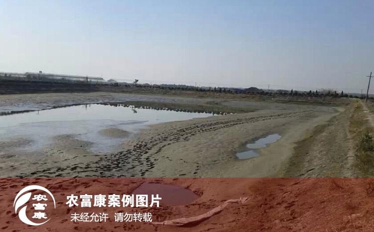 农12博体育水产em菌液养虾图片