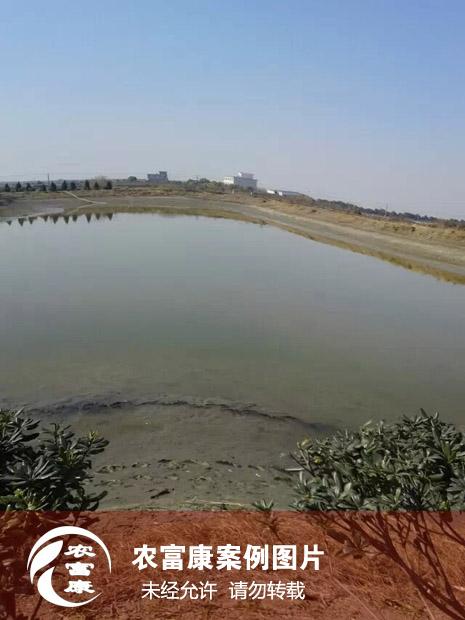 农12博体育水产养虾虾池