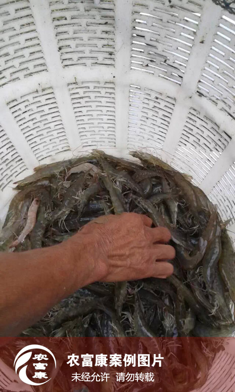 农12博体育水产em菌种