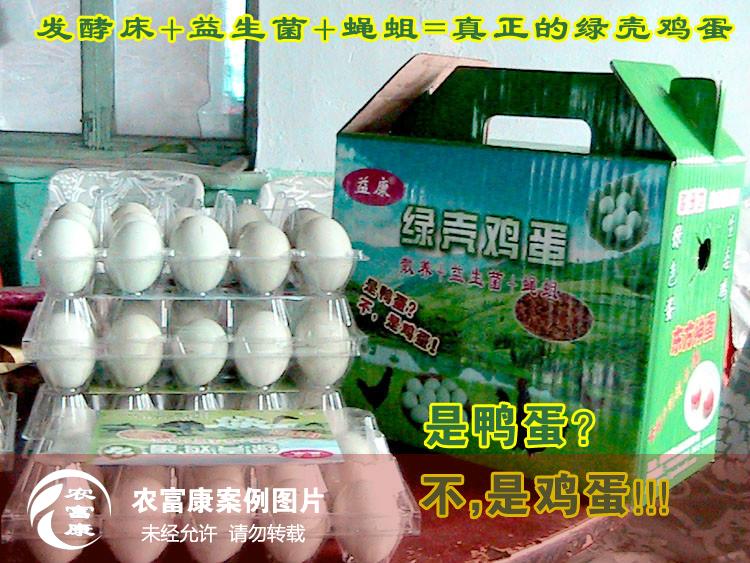 蛋鸡12博体育床实例