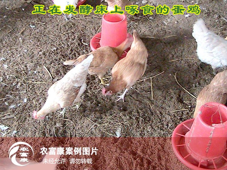 12博体育床养蛋鸡圈舍图片