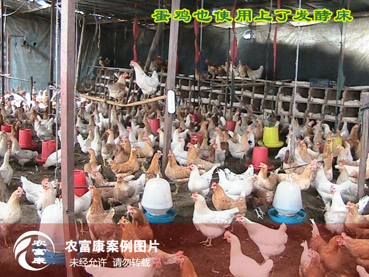 蛋鸡12博体育床图片
