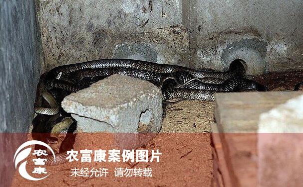 养蛇12博体育床技术