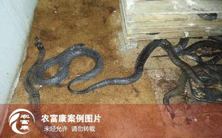 养蛇12博体育床制作技术