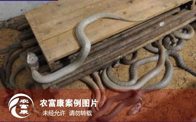 12博体育床养蛇技术