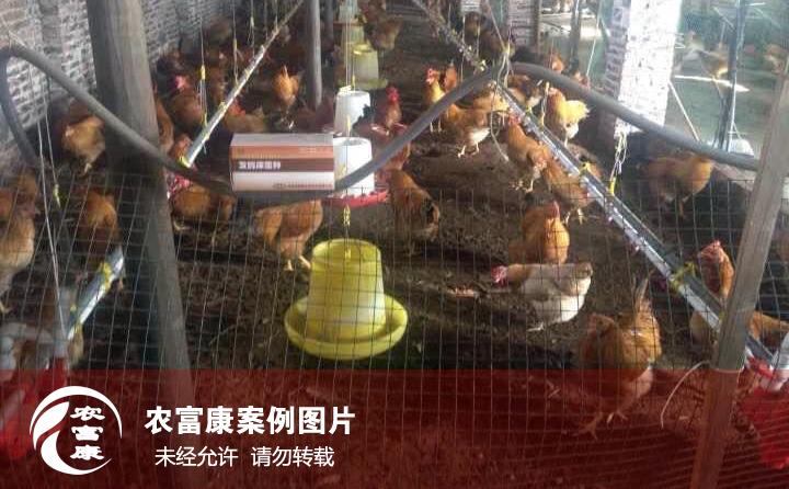 农12博体育12博体育床养鸡图片