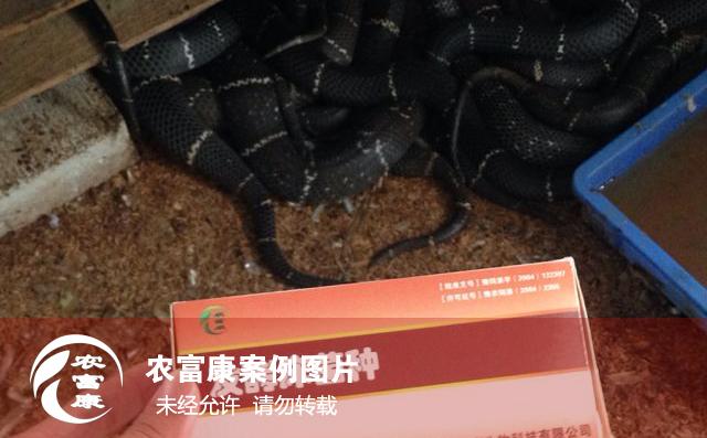 12博体育床养蛇图片