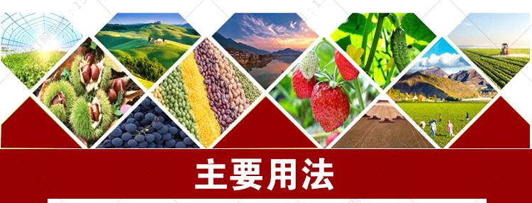 农富康种植菌液 无土栽培豆芽芽菜营养液栽培液叶面肥EM益生菌图片_6