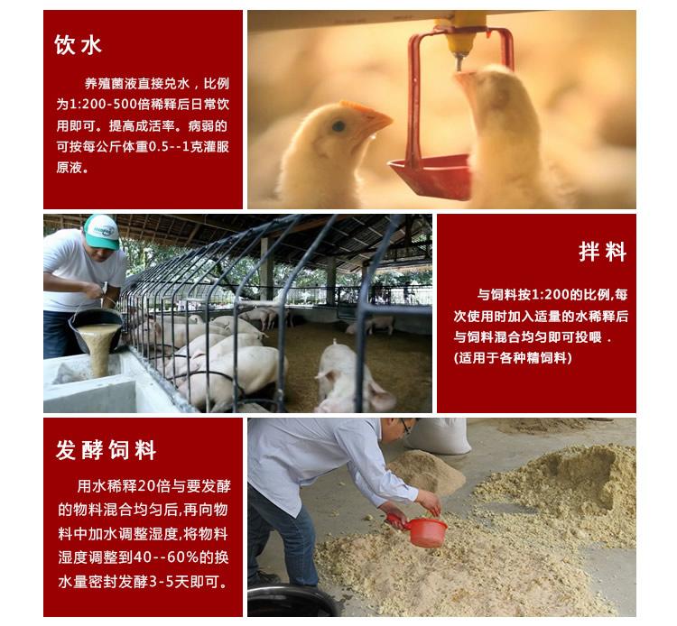 养鸡em菌液
